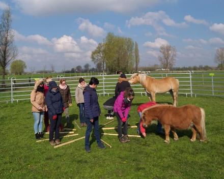 Paardencoaching - Persoonlijke ontwikkeling