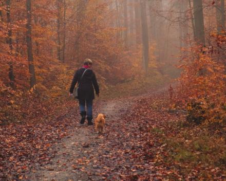 Wandelcoach met honden - Persoonlijke ontwikkeling